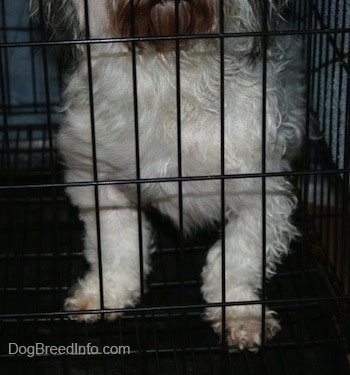 The front Legs of a dog inside of a dog crate