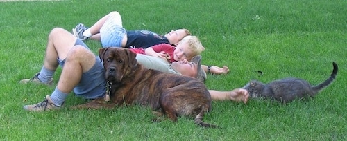 Waylon the Mastweiler laying in grass with a man, two children and a cat