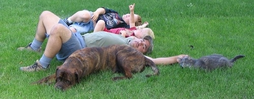 Waylon the Mastweiler sleeping in grass with a man and two children and a cat