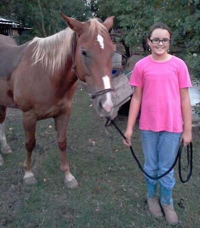 A brown with white Quarter horse is standing in grass and next to it is a girl in a hot pink shirt holding the horses reins