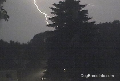 lightning striking behind a tree