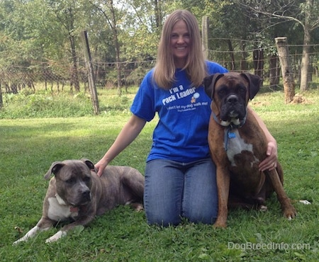 Pit Bull Terrier and Boxer pose with a lady in a yard
