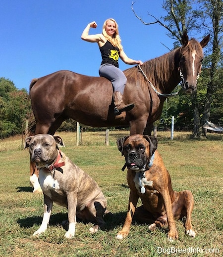 Spencer the Pit Bull and Bruno the Boxer sitting in front of Amie who is flexing on Scooter the horse