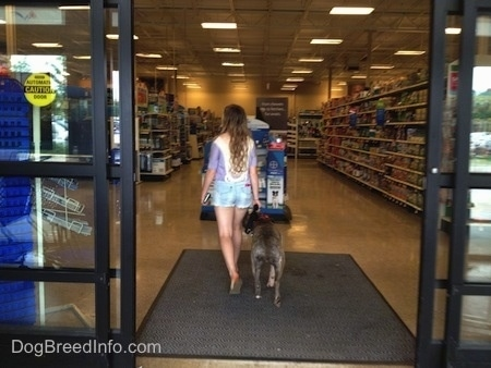 Spencer the Pit Bull Terrier and a girl are inside of the store on the welcome foot mat