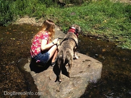 Spencer the Pit Bull Terrier and a girl on a big rock in the middle of water