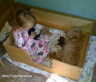 A child is in a box cuddling with a puppy and the dam is nursing