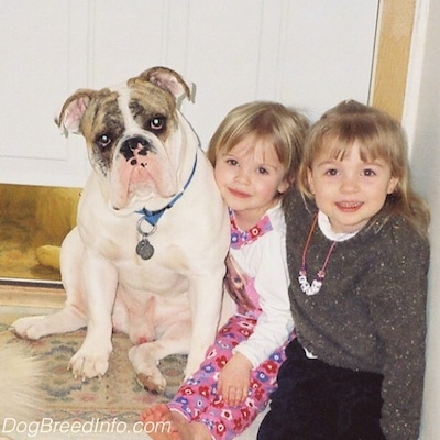 Two blonde haired girls are sitting next to a white with tan brindle Bulldog. They all are looking forward. The Bulldogs head is tilted to the left.