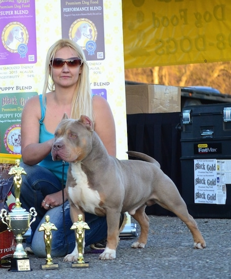 American Bully standing next to 3 trophies