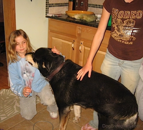 A Husky Rottie standing in a kitchen in front of two girls
