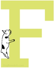 A drawn French Bulldog dog is on the left side of the letter F crawling up the side.