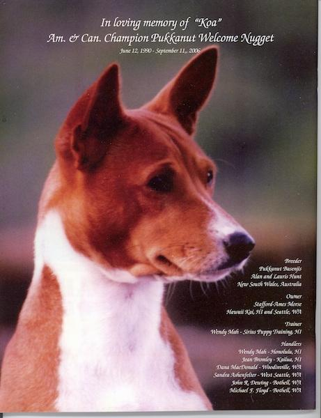 Head shot of a Basenji looking to the right with 'In Loving Memory of Kao' overlayed