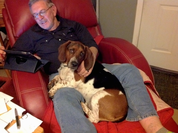 A man in glasses sitting on a red leather recliner chair reading an iPad with a tricolor hound dog sitting in his lap.