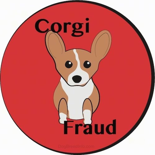 A drawling of a little tan and white short legged puppy sitting down inside of a red circle that says Corgi Fraud. The dog has large perk ears, a black nose and dark eyes.
