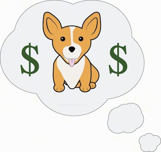 A cute Corgi dog sitting down with two green money signs on each side of it. The dog looks like a pupppy and has large perk ears.'