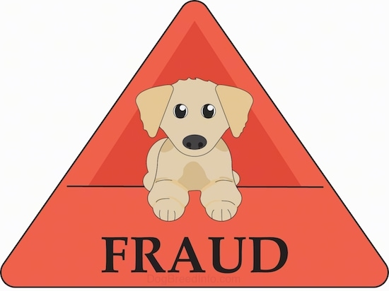 A drawn picture of a Golden Retriever puppy laying down with an orange triangle sign around it with the words Fraud under it.