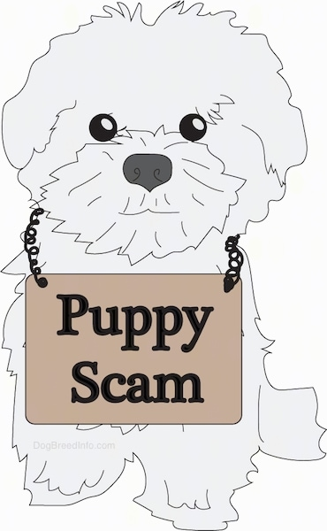 A drawling of a cute little Maltese puppy sitting down with a brown sign that reads 'Puppy Scam' around its neck.