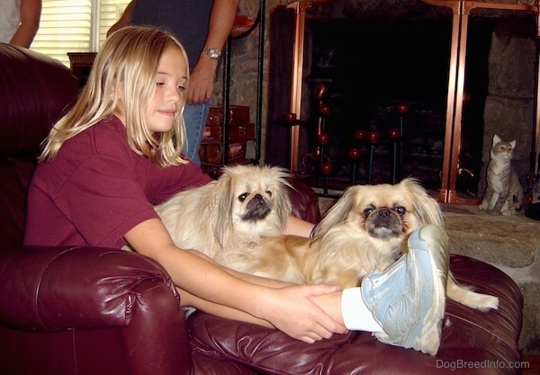 A blonde-haired girl sitting on a purple leather recliner with two small light tan and black pekingese dogs on her lap.