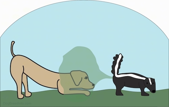 An drawn image of a brown dog play bowing at the back end of a skunk that is spraying its stink out onto the dog's face.