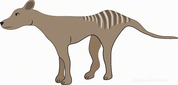A brown dog with stripes on its coat facing the left. The dog has a long muzzle, a long tail and a long skinny body. It has small perk rounded ears.