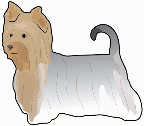 A drawing of a tan, gray and black toy sized, long haired dog with ears that fold over at the tips, dark eyes and a dark nose with its tail up in the air and curled over at the tips standing sideways.