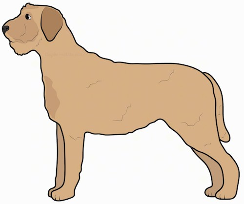 Side view of a tan dog with small ears that hang down to the sides, black eyes and a dark nose with a wiry looking body.