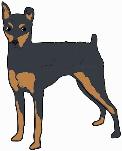Side view of a drawing of a black with tan dog with dark eyes, a nub for a tail and one ear that stands up to a point and the other ear is folded over at the tip.