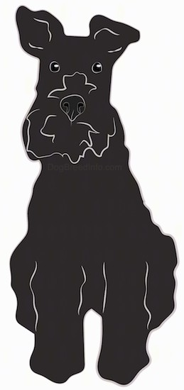 A drawing of a black,thick coated, wiry looking dog with a beard, thick muzzle, black nose, black eyes and ears that stand up and flop over a little at the tips sitting down.