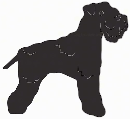 Side view of a drawing of a black,thick coated, wiry looking dog with a beard, thick muzzle, black nose, black eyes and small ears that fold over at the tips and a short tail.