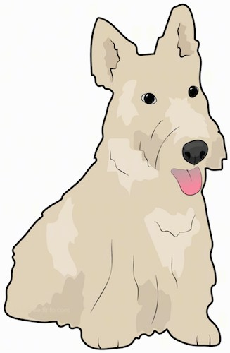 Front side view drawing of a small, long coated, tan dog, a boxy long square muzzle, a big black nose and perk ears with its pink tongue hanging out sitting down.