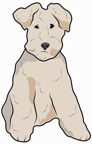 A drawing of a terrier type, low to the ground dog with a thick coat, small v-shaped ears that hang down to the sides and small dark eyes sitting down.