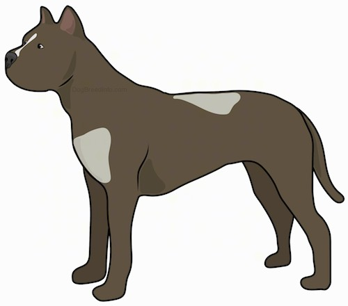 A drawing of a large breed brown dog with patches of tan and small perk ears and a long tail standing sideways.