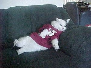 A cat wearing a football jersey laying against the arm of a couch