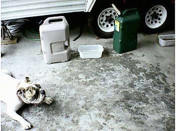 Spike the Bulldog is laying outside on a concrete floor. There is a trailer in the background and 2 plastic water containers in front of it. In between the containers are a water pan and a food pan. The floor is all wet from Spike drinking.