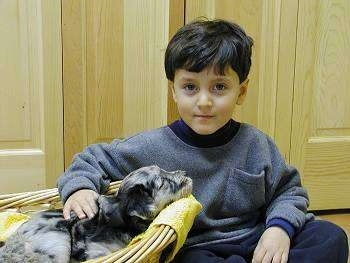 A child sitting next to and petting a Bergamasco puppy in a basket