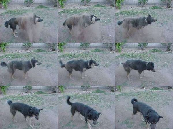 A compilation of images that show a dog shaking itself clean of dirt.