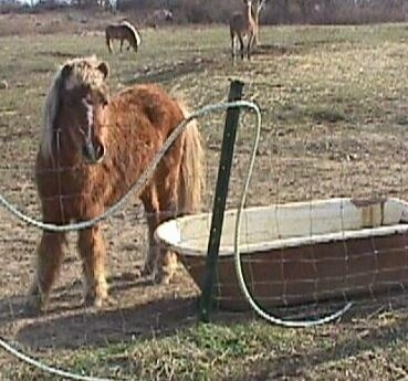 A brown with white pony with blonde hair is standing near a an old medal bathtub in front of a wire fence.