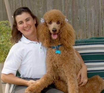A person is sitting in a lawn chair next to a brown Standard Poodle dog. They are both looking forward, the Poodles mouth is open and tongue is out.