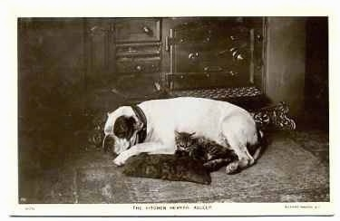 A picture of a bulldog that is sleeping on a pillow with a cat on the floor.