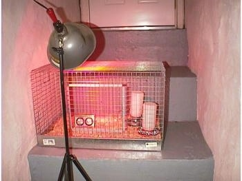 A cage on a stone step with a heat lamp aimed at it.