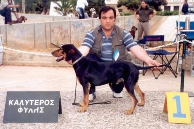 A black and tan Greek Hound is being posed by a person who is kneeling behind it at a dog show.