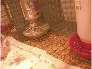 A feeder and water dispencer sitting on the wire bottom of a cage with the paper towel stopping in front of it. There is a lot of feed at the bottom of the cage