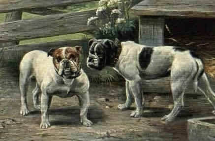 A colored drawing of two bulldogs that are standing in front of a wooden fence next to a dog house.